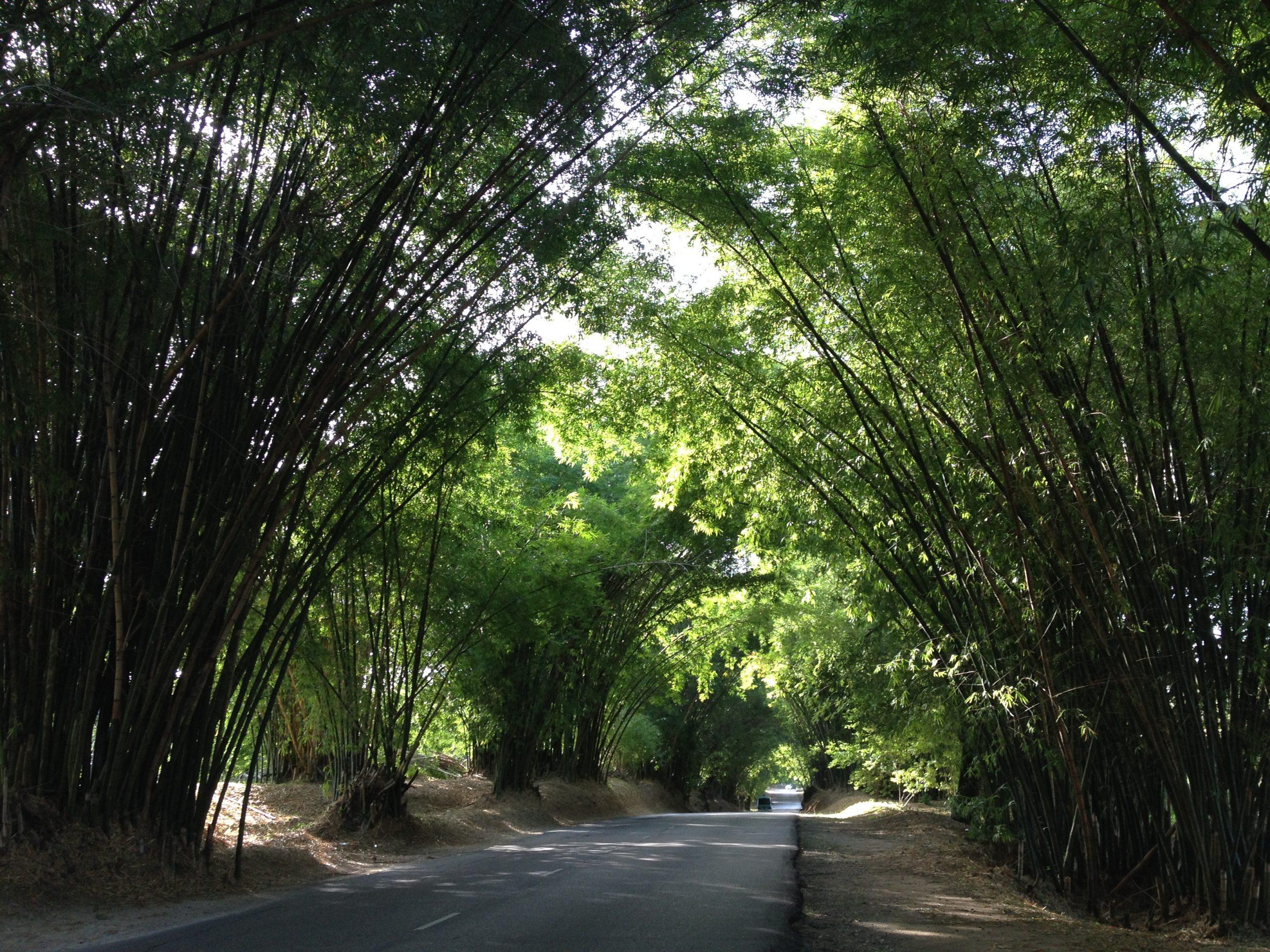 Bamboo av Rappa Rasta Tours Jamaica