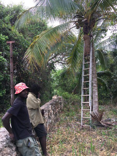 Farm coconut palm_EM